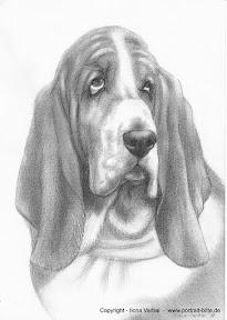 basset hound.JPG