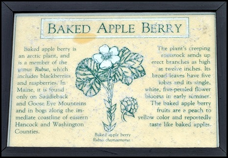 04w9 - Hike - Baked Apple Berry Sign