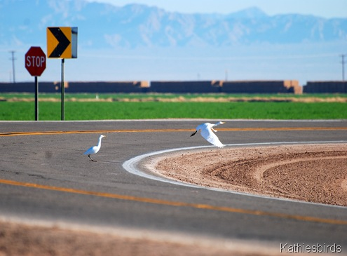 2. birds in road-kab