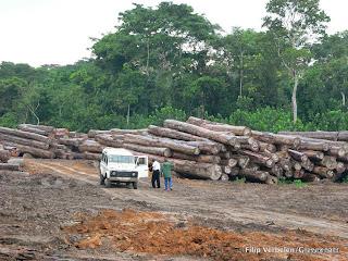 Troncs d'arbres dans la concession Safbois à Djabir, prêt de Isangi, dans la province orientale, 2005.