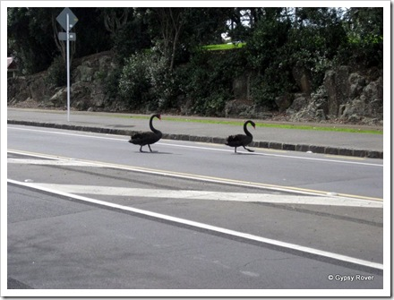 This pair were caught crossing the road outside the Zoo.