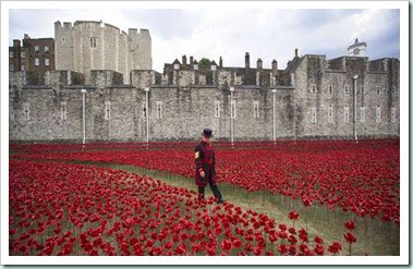 tower of londn poppies