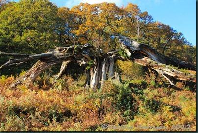 54-broken-tree