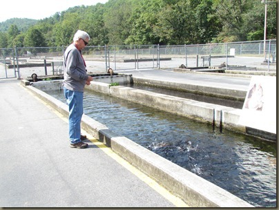 Fish hatchery mt pisgah national forest