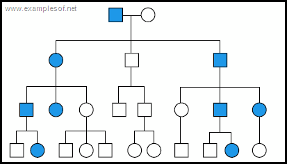 Pedigree chart of Autosomal Dominant Trait