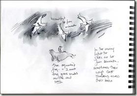 gulls bg