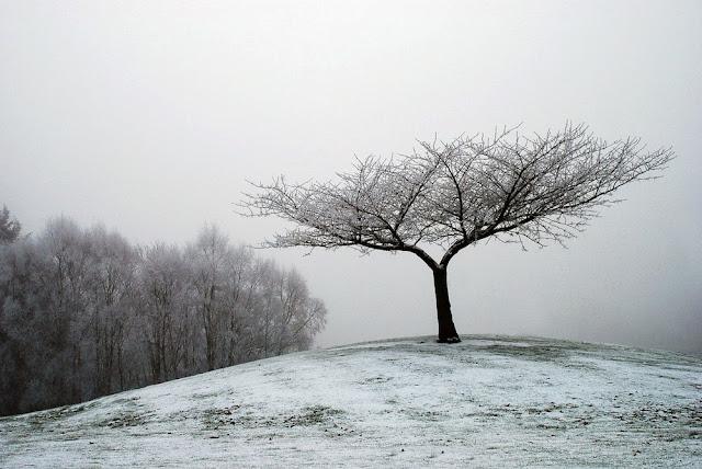 Lonely Tree.jpeg