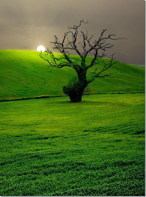 Campo-Andaluz-Andalusian-Countryside[6]