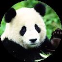 Image Google de Panda Création