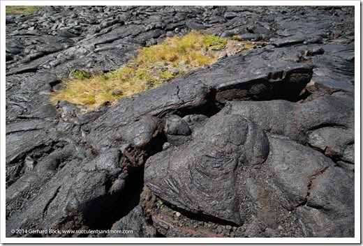 140724_HawaiiVolcanoesNP_0094