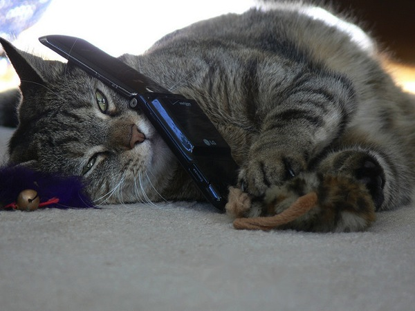 Cat on phone