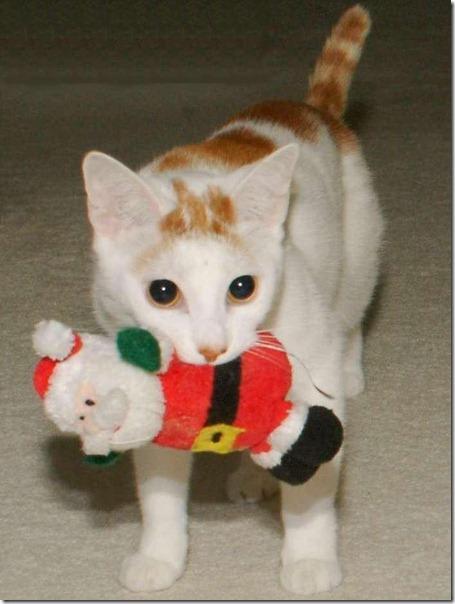 gatos gorro papá noel (29)