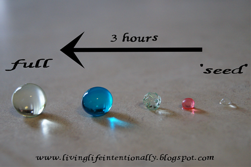 water bead experiment #2