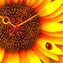 SunFlower* LWP Trial icon