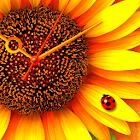 ひまわり*Sunflower ライブ壁紙 トライアル icon