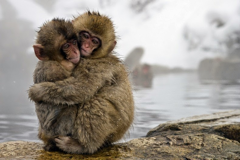 snow-monkeys-jigokudani-7