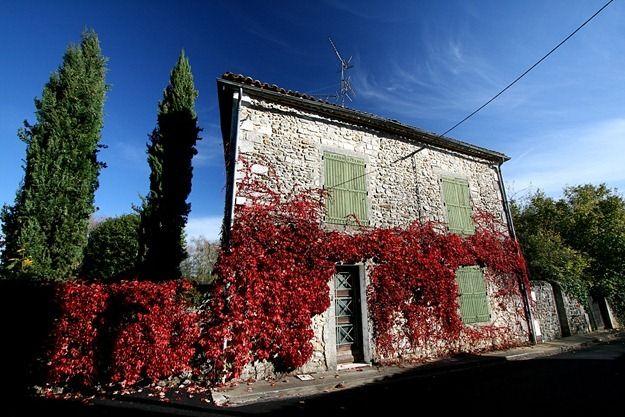 Red leaf coated house