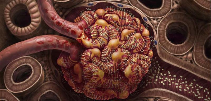 Glomérulo