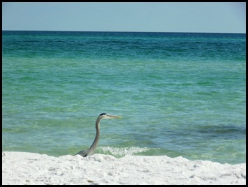 Fort Pickens Beach 034
