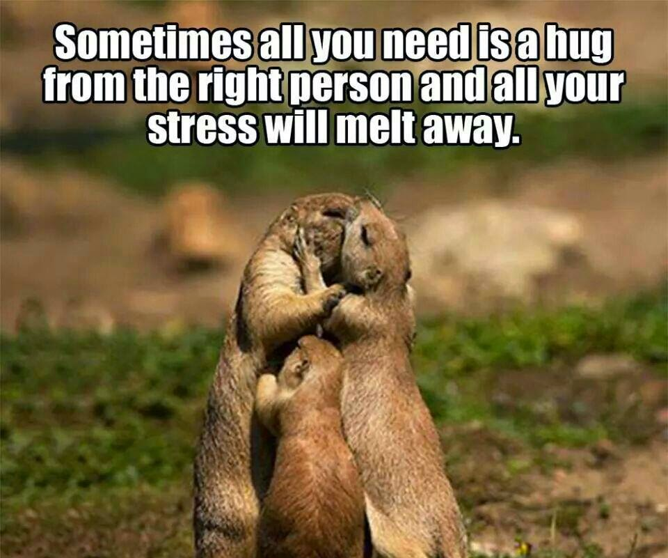 I Want To Cuddle With You Quotes: #Sometimes All You Need Is A #hug #lifequote