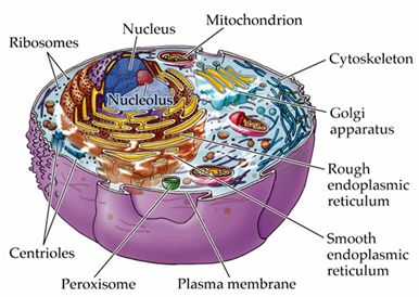 GAMSAT Biology The Cell