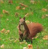 Nusskumpel / Eichhörnchen - Was is denn hier los?