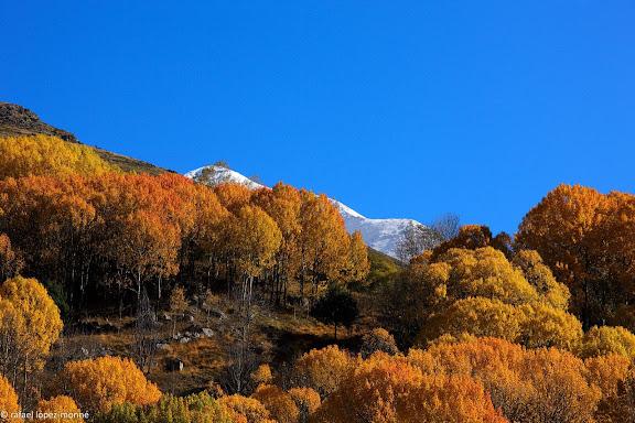 Bosc de caducifolis al voltant de Taull.La Vall de Boi, Alta Ribagorca, Lleida