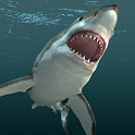 3D Shark Live Wallpaper icon