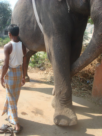 Imagini India: un om si un elefant