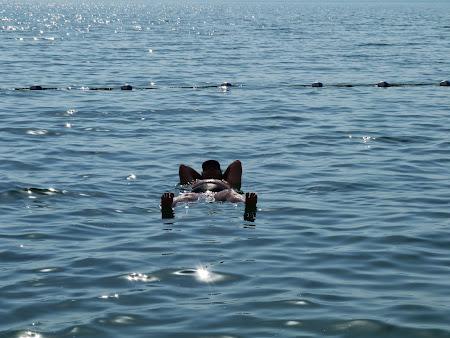 Pe Marea Moarta