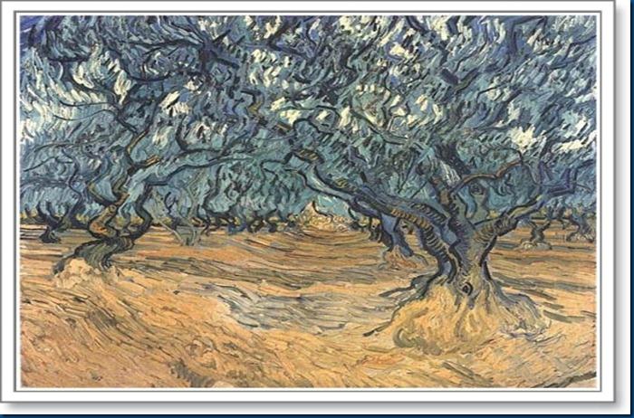 olive%20trees%20p