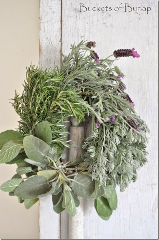 Herbs 6