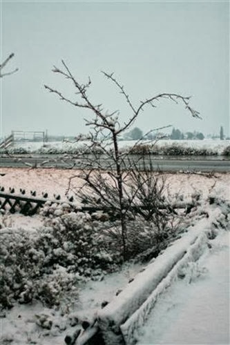 20091217 (3) (Small)