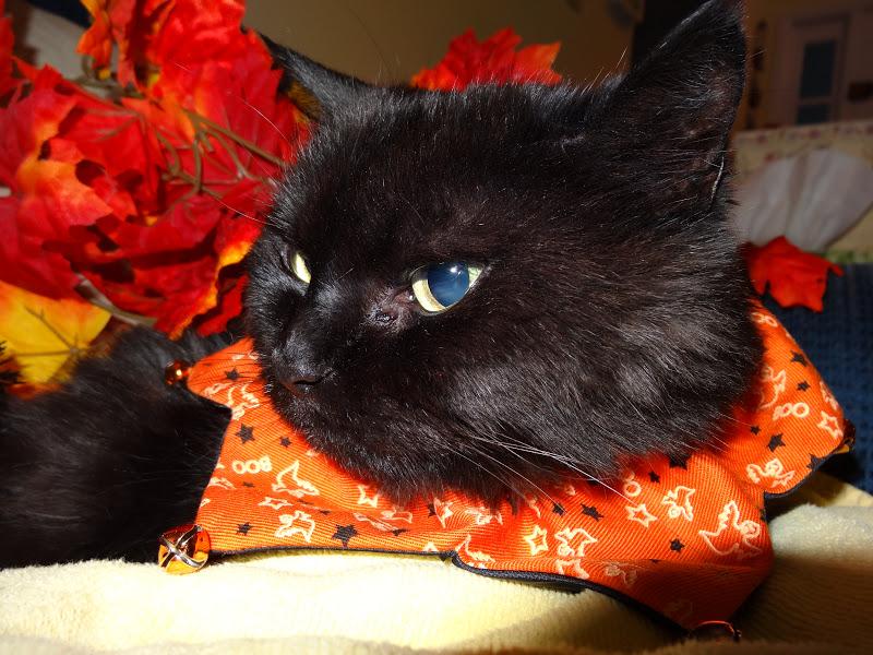 happy halloween funny cat photos - Funny Cat Halloween