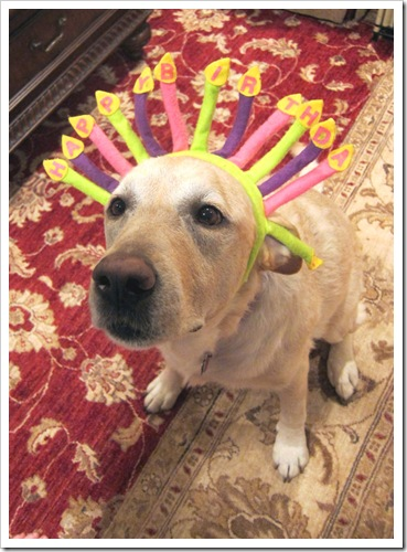 murphy dog birthday hat