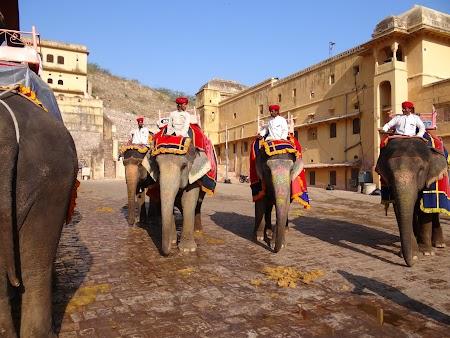 10. Elefanti la Jaipur.JPG