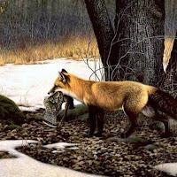 Animales, loros, aves, gatos, perros, fieras, osos, -2.jpg
