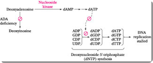 THE CATABOLISM OF THE PURINE NUCLEOTIDES