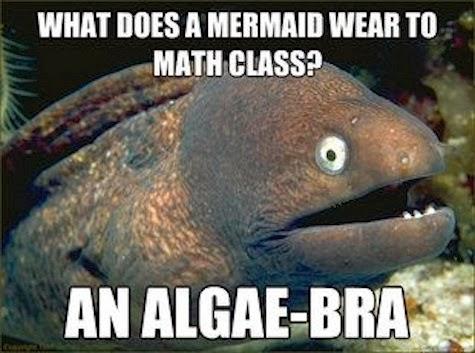 [Image: algae-bra.jpg]
