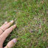 芝生はこんな感じ