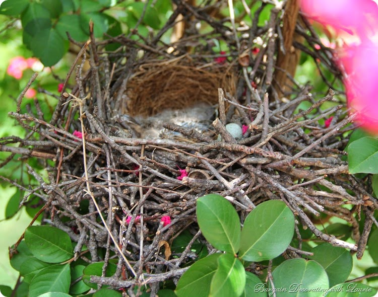 Mocking Bird Nest 1