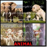 ANIMAL- 4 Pics 1 Word Answers 3 Letters