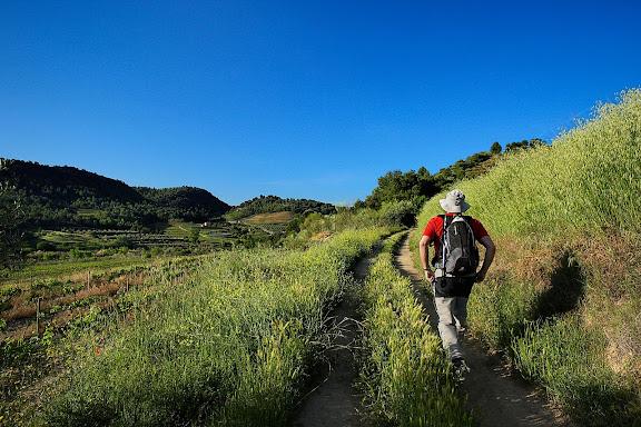 Camí ral del Molar al Masroig, vinyes DO Montsant,El Molar, Priorat, Tarragona