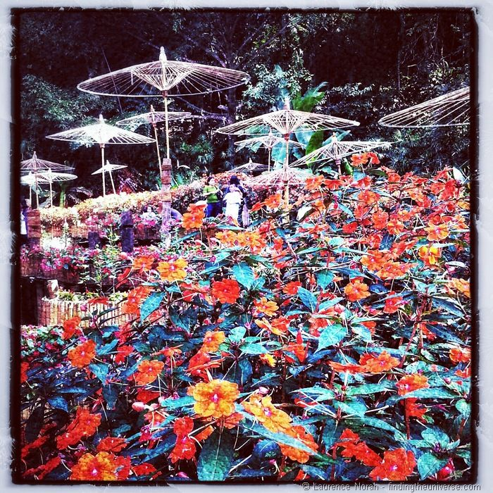Flowers and umbrellas Golden Triangle Thailand