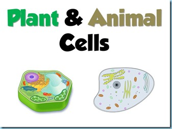Plant animals cells powerpoint 1111 it is fully animated showing answers upon clicks first there is a matching portion the little star pops up for the word that is to be matched ccuart Choice Image