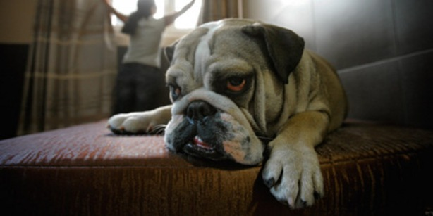 perro conciencia