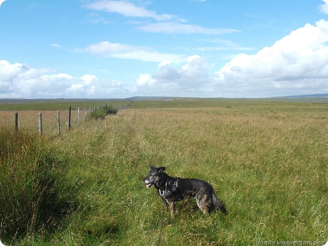 wide open spaces - by the fence to Cumbria