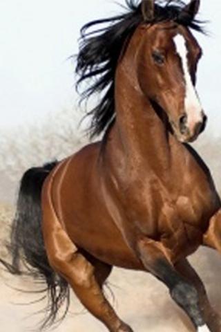 Arabian Horse Wallpapers On Google Play Reviews Stats