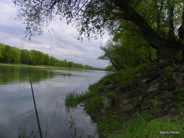 Vieux Rhône à Irigny en  aval réserve de Pierre-Bénite photo #985