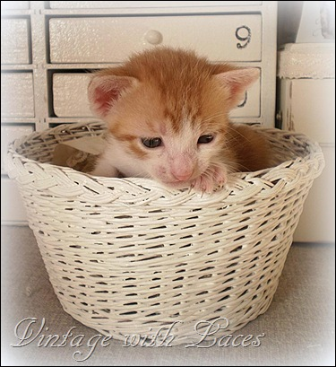 White Collar in basket